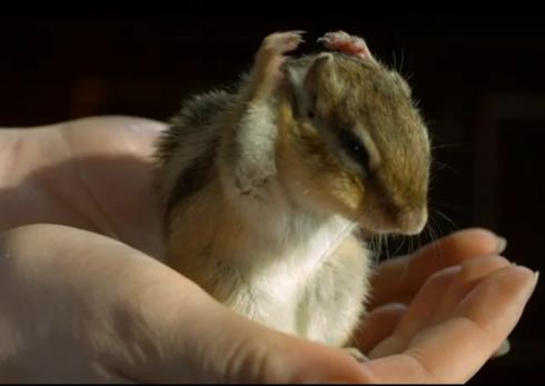 ecureuil slow motion