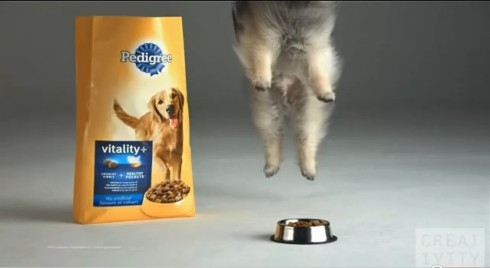 pub Pedigree chiens Slow Motion