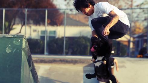 Dogboarding3